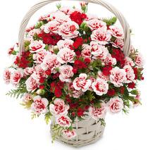 카네이션꽃바구니 2호