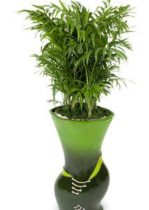 테이블야자-공기정화식물