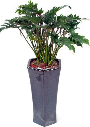 셀렘 실내공기정화식물