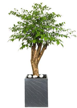 해피트리고급-행복나무