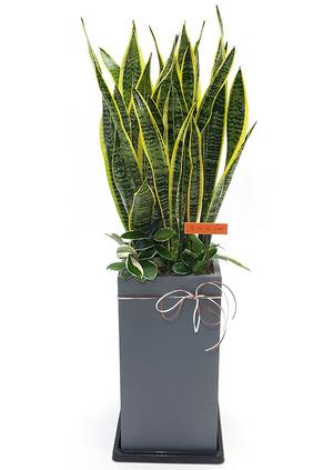 실내공기정화식물 산세사각
