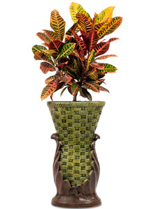 잎크로톤 실내인테리어식물