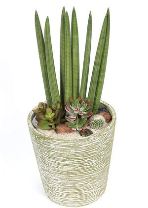 실내식물 스투키원형