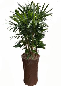 관음죽-실내관엽식물