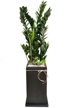 돈나무-사각분 식당개업선물