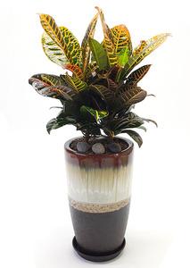 크로톤-실내공기정화식물