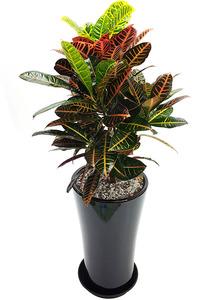 크로톤 실내공기정화식물