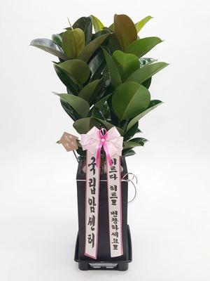 실내공기정화 고무사각3대
