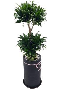 공기정화식물 콤펙타