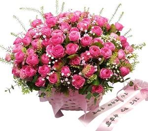 핑크장미꽃100송이 고백 24
