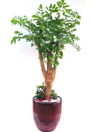 행복나무 개업축하선물
