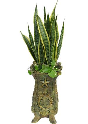 산세 실내공기정화식물