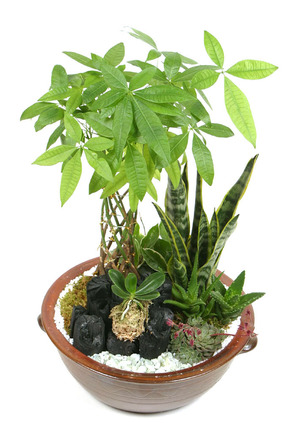 공기정화식물모듬